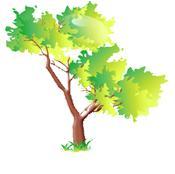 drzewko12